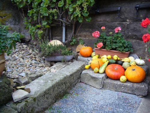 pumpkin succhini choose