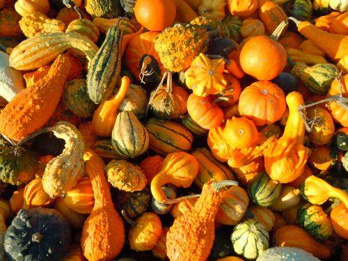 pumpkin autumn gourd