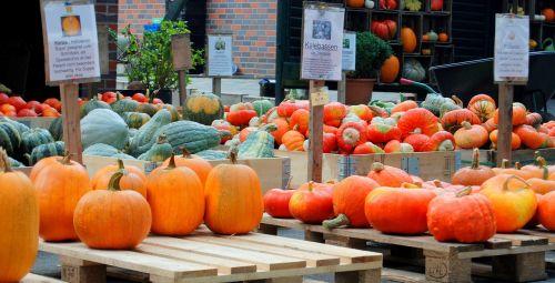 pumpkin pumpkins helloween