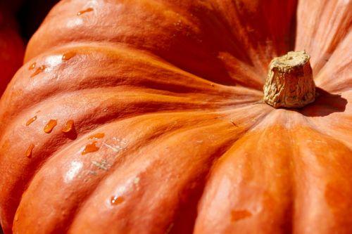 pumpkin orange harvest