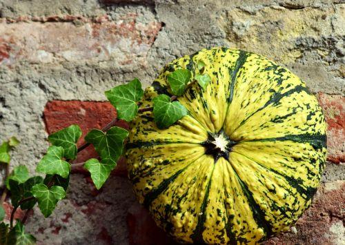 pumpkin gourd ivy