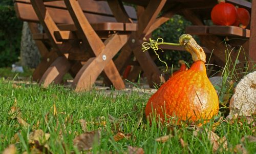 pumpkin autumn ornamental pumpkins