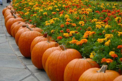 pumpkin october halloween