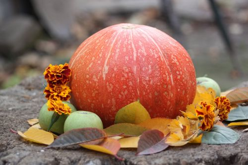 pumpkin autumn vegetable