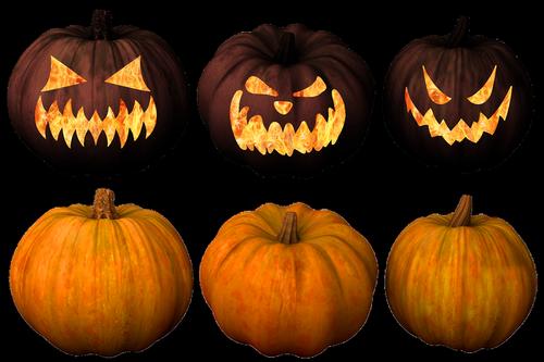 pumpkin  pumpkins  jack