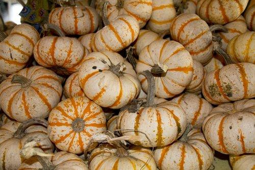 pumpkin  autumn  seasonal