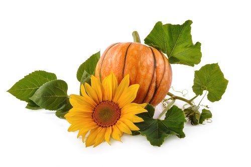 pumpkin  background  natural