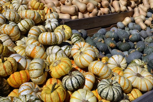 pumpkin  gourd  vegetables