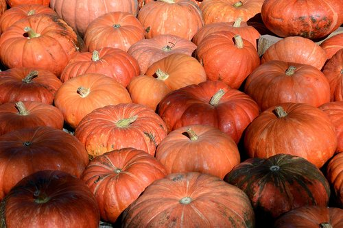 pumpkin  vegetables  autumn