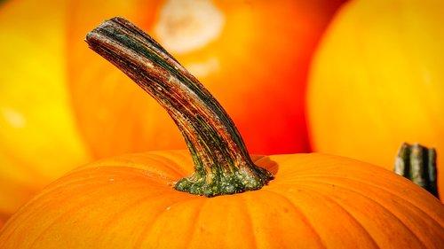 pumpkin  stalk  autumn