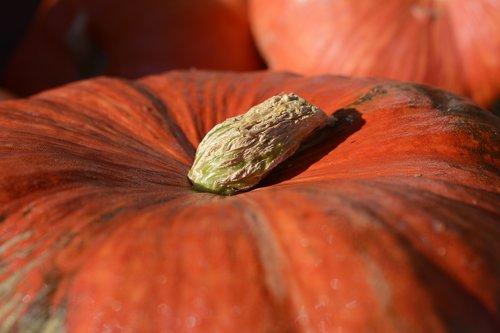 pumpkin  gourd  vegetables