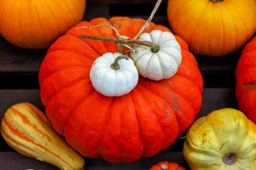 pumpkin  autumn  decoration