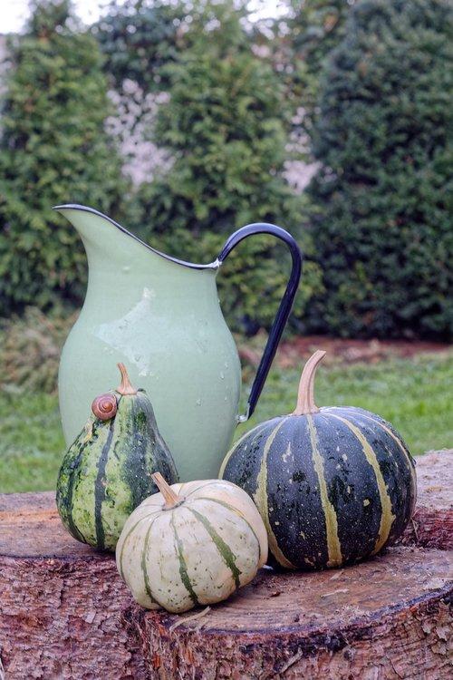 pumpkin  pumpkins  green
