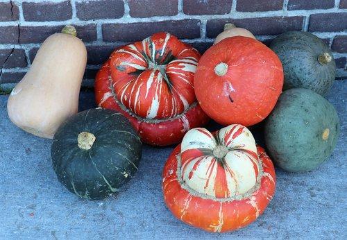 pumpkin  deco  autumn