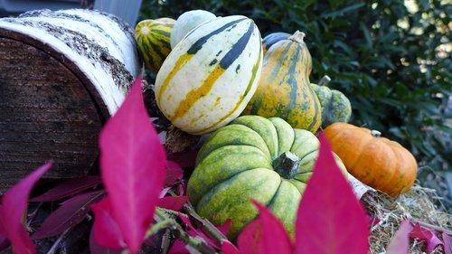 pumpkin  deco  decoration