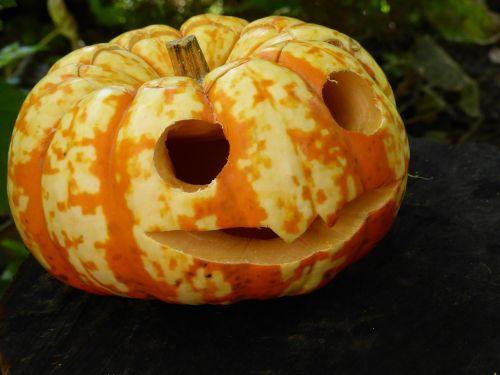 pumpkin halloween tinker