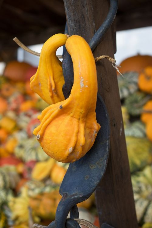 pumpkin autumn orange