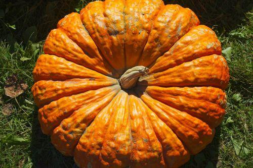 pumpkin fall seasonal