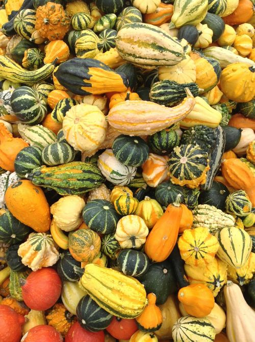 pumpkin versatile fruit