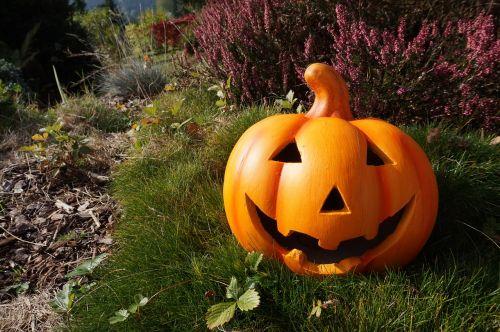 pumpkin garden helloween