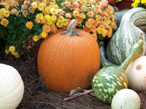moliūgas, moliūgai, gėlės, šienas, kritimas, ruduo, Halloween, moliūgai ir moliūgai