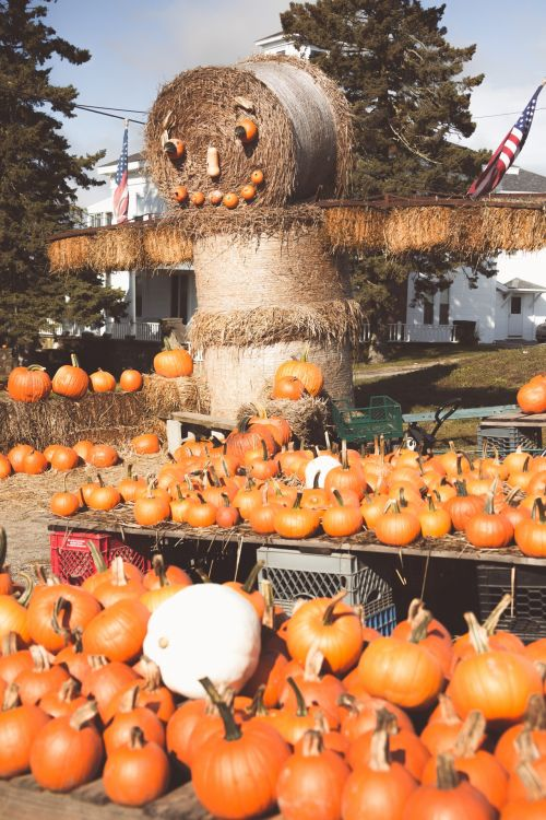 Pumpkin Straw Character