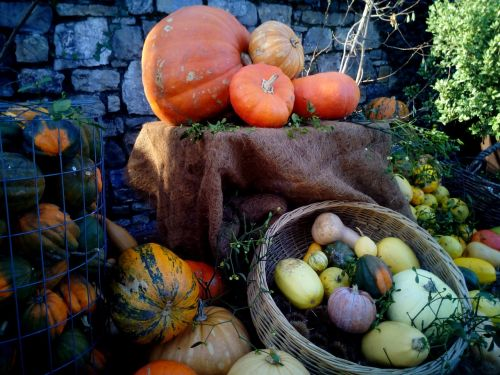 pumpkins squash cucurbits