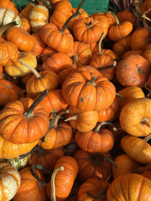 pumpkins fall orange