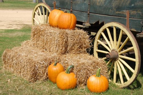 pumpkins wagon farm
