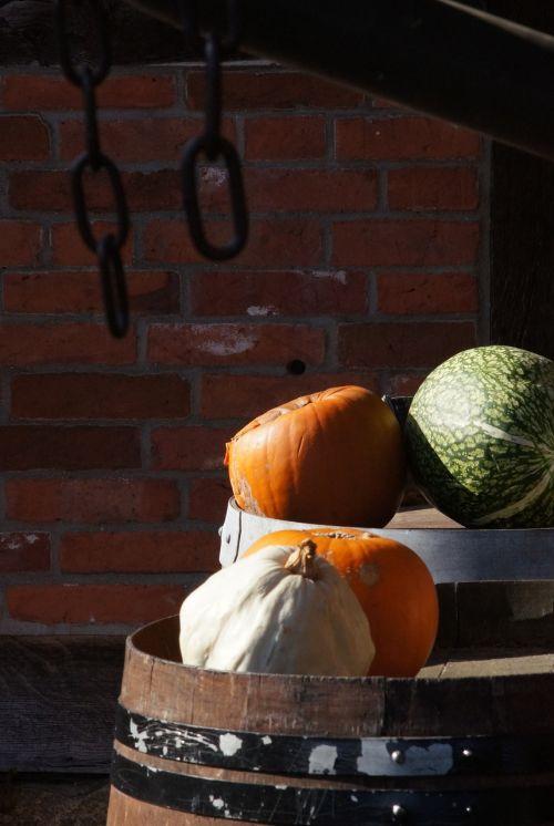 pumpkins green orange