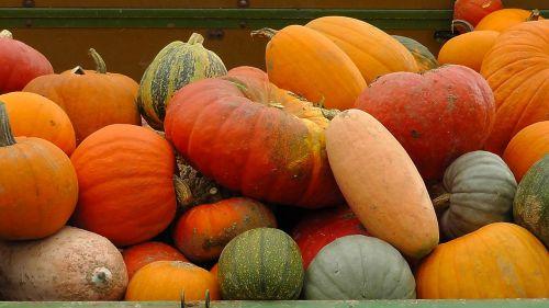 pumpkins autumn golden autumn pumpkins