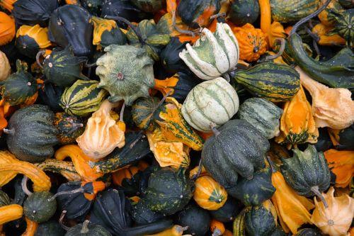 pumpkins decorative squashes green