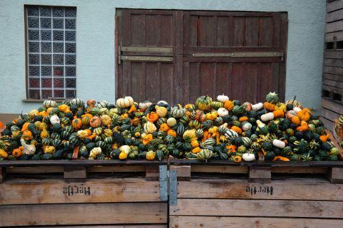 pumpkins decorative squashes storage