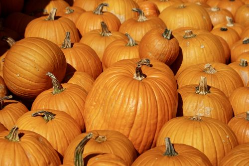 pumpkins pumpkin orange