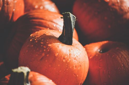 pumpkins mini pumpkins fall