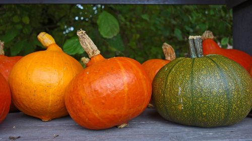 pumpkins autumn decoration ornamental fruit