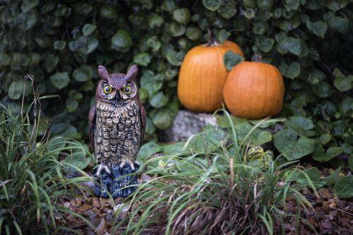 pumpkins owl halloween