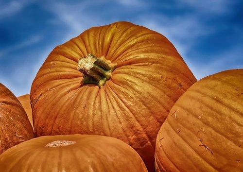 pumpkins  colorful  autumn