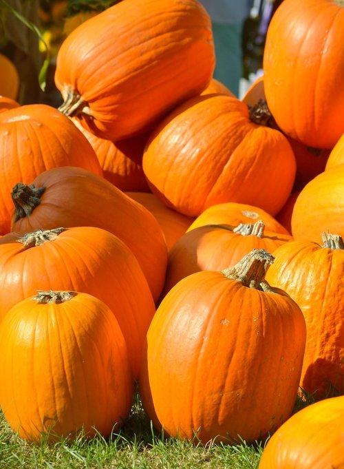 pumpkins  orange  autumn