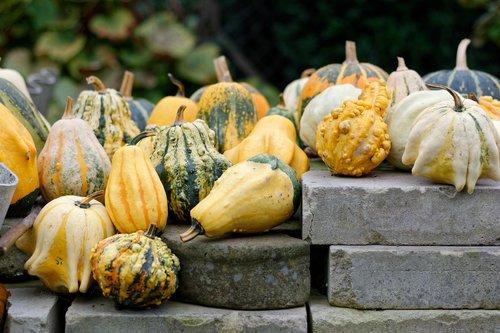 pumpkins  pumpkin  ornamental pumpkins