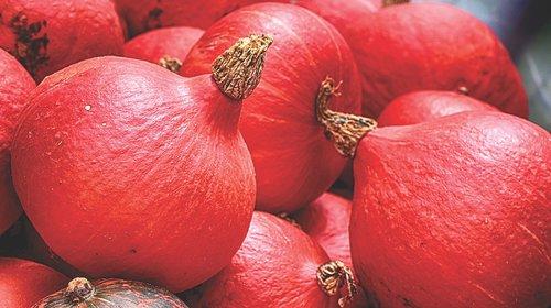 pumpkins  red  autumn