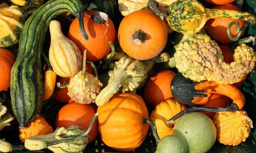 pumpkins yellow vegetables