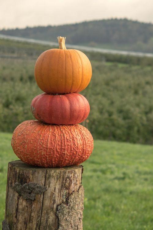 pumpkins autumn orange