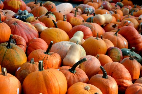 pumpkins,autumn,fruit,vegetables,color,seasonal