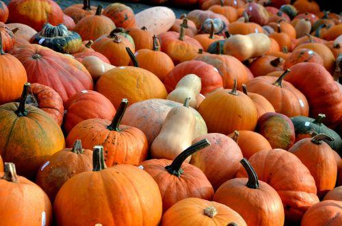 pumpkins autumn fruit