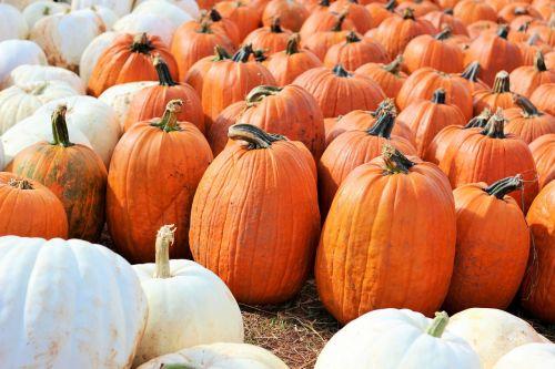 pumpkins halloween october