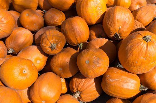 pumpkins cucurbita cucurbitaceae
