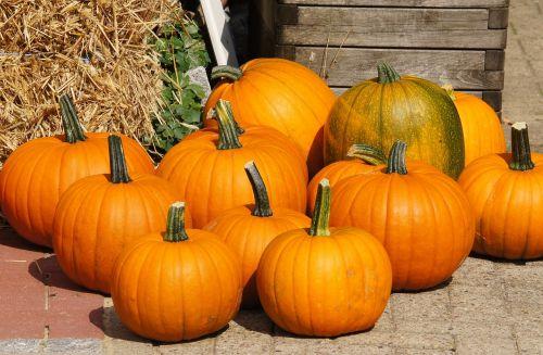 pumpkins autumn halloween