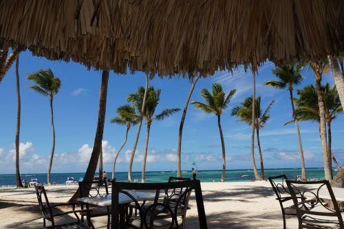 punta cana beach palm trees