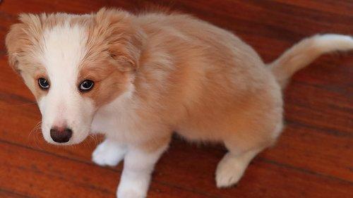 pup  cute  sitting